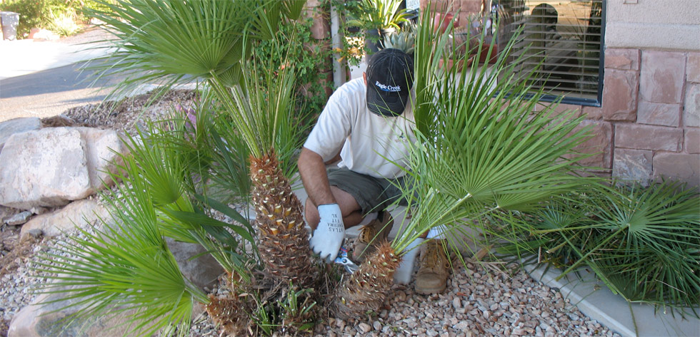 Lawn Care In St George Ut By St George Landscaping